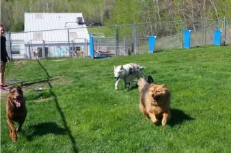 sierra running with friends